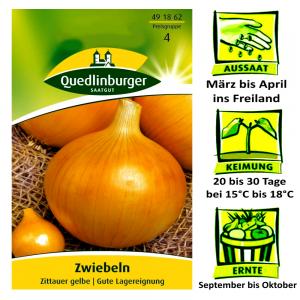 Quedlinburger Zwiebeln Sorte Zittauer Gelbe Allium Cepa / gute Lagereigenschaften / Ernte September bis Oktober