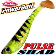 Berkley Power Bait Pulse Shad Gummifisch 6cm Perch 5 Stück im Set!