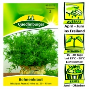 Quedlinburger Bohnenkraut würzig - Satureja hortensis / ideal zum einlegen & würzen / Ernte Juni bis Oktober