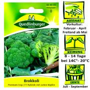 Quedlinburger Brokkoli Premium Crop - F1 Hybride - Brassica oleracea / mit zarten Kpfen / Ernte Juli bis September