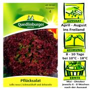 Quedlinburger Pflücksalat Sorte Lollo rossa Lactuca sativa / schmackhaft & dekorativ / Ernte Mai bis Oktober