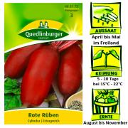 Quedlinburger Rote Rüben Cylindra - Beta vulgaris / Ertragreich / Ernte August bis November