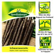 Quedlinburger Schwarzwurzel Sorte Duplex - Scorzonera hispanica / gute Lagerung / Ernte September bis April