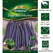 Quedlinburger Topf Buschbohnen Lila Sorte Amethyst Premium Saatgut / Ernte Juli bis Oktober / mit Sortenetikett