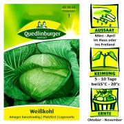 Quedlinburger Weißkohl Sorte Amager kurzstrunkig -  Brassica oleracea / Platzfest gute Lagersorte / Ernte Oktober bis November