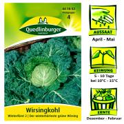 Quedlinburger Wirsingkofl Sorte Winterfürst 2 - Brassica oleracea var. Sabauda / der winterhärteste grüne Wirsing / Ernte Dezember bis Februar