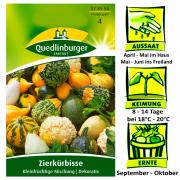 Quedlinburger Zierkürbisse keinfrüchtige Mischung - Cucurbita pepo / sehr Dekorativ / Ernte September bis Oktober