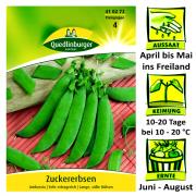 Quedlinburger Zuckererbsen Sorte Ambrosia Pisum sativum / sehr Ertragreich / Ernte  Juni bis August / lange süße Hülsen