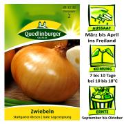 Quedlinburger Zwiebeln Sorte Stuttgarter Riesen Allium Cepa / gute Lagereigenschaften / Ernte September bis Oktober